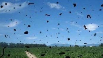 飞蚊症是什么